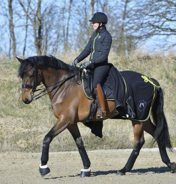 hest-i-skridt